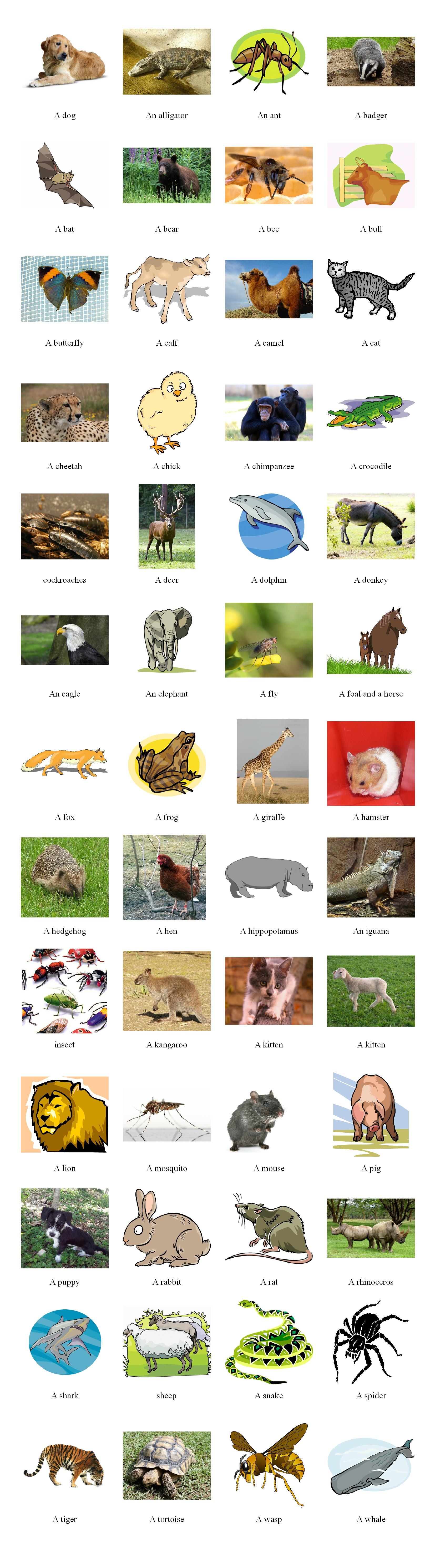 Animals pictionary