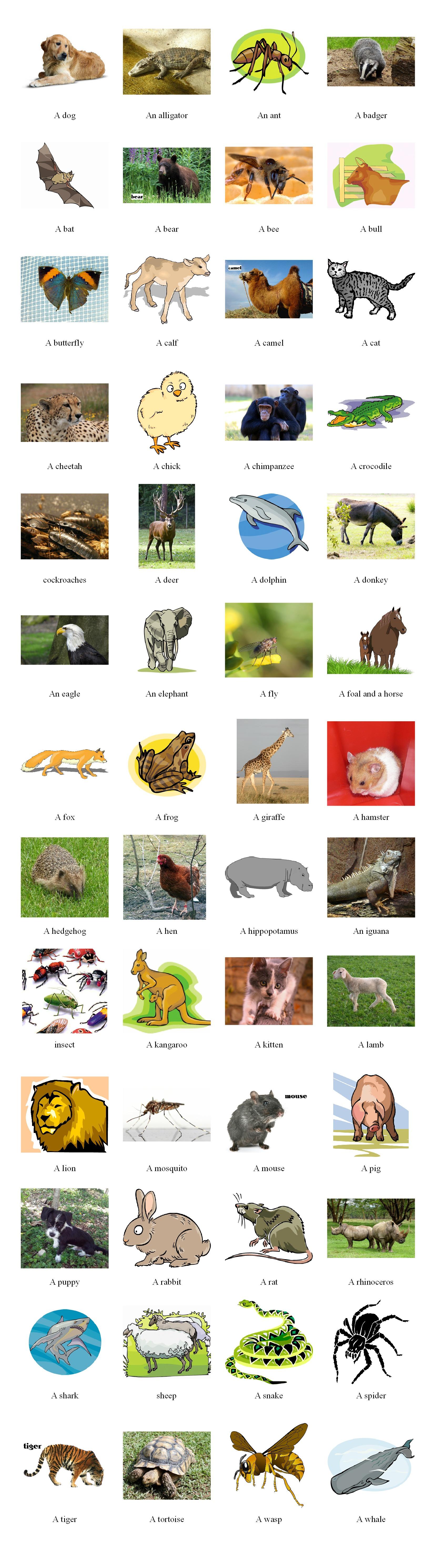 Pictionary animals 2