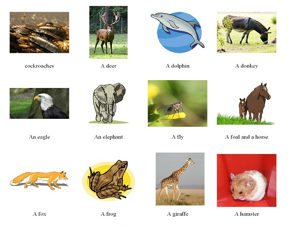 Pictionary_animals for web
