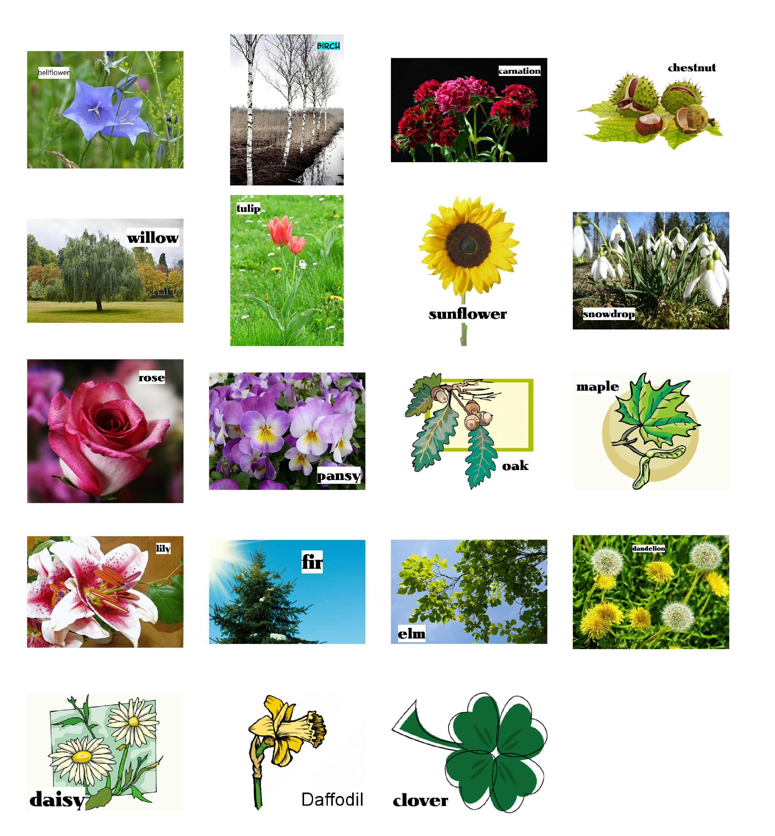 Plants Pictionary To Learn The Names Of